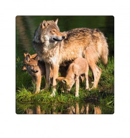 Wolf-Familie